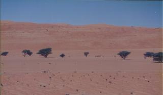 OmanPhotoDesert
